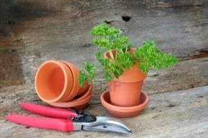 Cultivez son jardin